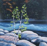 """Birches on the Gull River, acrylic on texturized canvas, 20"""" x 20"""" SOLD"""